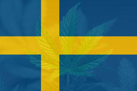 Weed Decriminalization in Sweden. leaf of cannabis marijuana on the flag of Sweden. Cannabis legalization in the Sweden. Medical cannabis in the Sweden.
