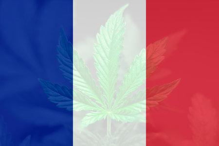 Cannabis legalization in the France. Medical cannabis in the France. Decriminalization Weed in France. leaf of cannabis marijuana on the flag of France.