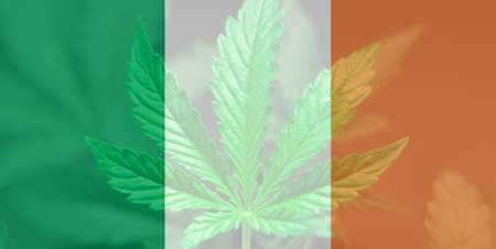 Cannabis legalization in the Ireland. Medical cannabis in the Ireland. leaf of cannabis marijuana on the flag of Ireland. Weed Decriminalization in Ireland.