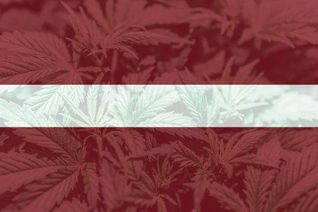 Weed Decriminalization in Latvia. Cannabis legalization in the Latvia. Medical cannabis in the Latvia. leaf of cannabis marijuana on the flag of Latvia.