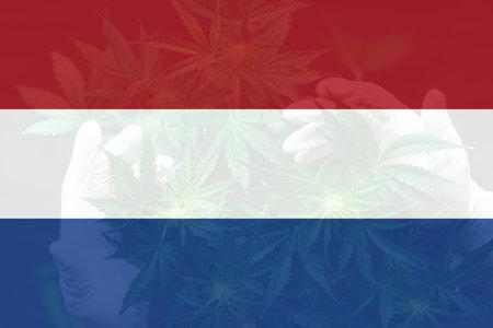leaf of cannabis marijuana on the flag of Netherlands. Weed Decriminalization in Netherlands. Cannabis legalization in the Netherlands. Medical cannabis in the Netherlands.