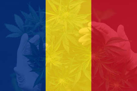 Cannabis legalization in the Romania. Medical cannabis in the Romania. leaf of cannabis marijuana on the flag of Romania. Weed Decriminalization in Romania.