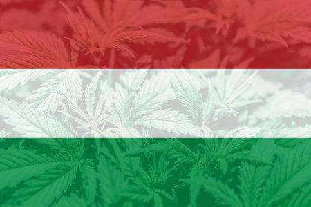 leaf of cannabis marijuana on the flag of Hungary. Medical cannabis in the Hungary. Cannabis legalization in the Hungary. Weed Decriminalization in US.