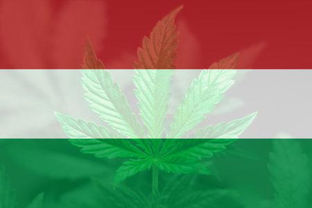 Cannabis legalization in the Hungary. Weed Decriminalization in US. leaf of cannabis marijuana on the flag of Hungary. Medical cannabis in the Hungary.