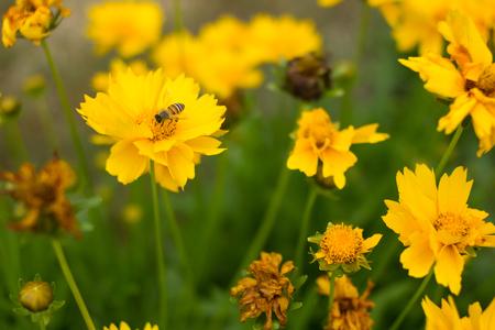 recolectar: gather honey