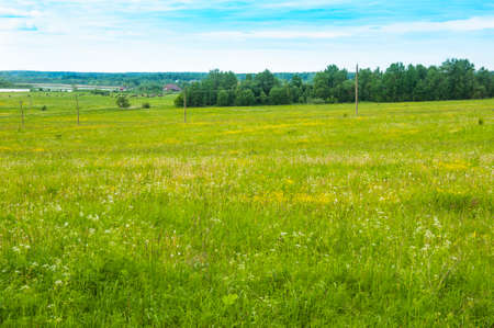 Cows grazing in green meadow