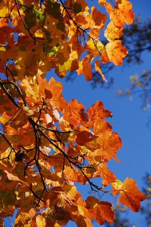 molise: Autumn in the national park Abruzzo Lazio Molise Stock Photo
