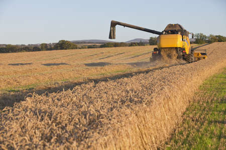 farmlands: Harvesting combine in the field cropping the grain Stock Photo