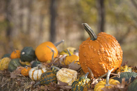 Display of different Pumpkins on hay with vivid aoutumn background