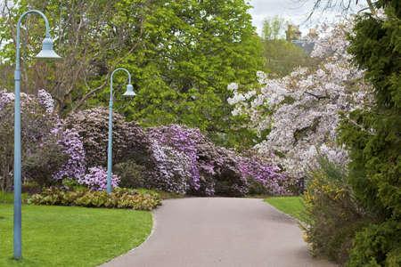 Beautiful spring scene of blossoming trees and bushes in public city garden, Scotland, Edinburgh Royal Botanical Garden