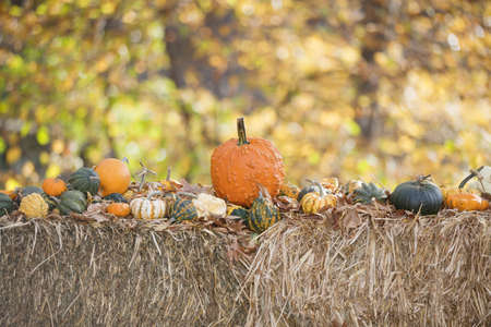 Harvest of different Pumpkins on  hay with autumn nature background Stock Photo