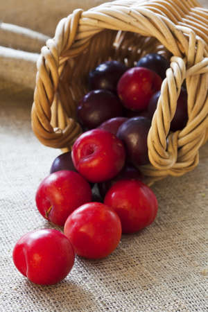 Ripe fresh picked plums scattered from wicker basket closeup photo