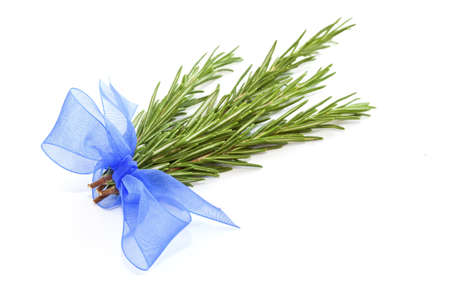 Fresh rosemary bundled with blue ribbon isolated on white background