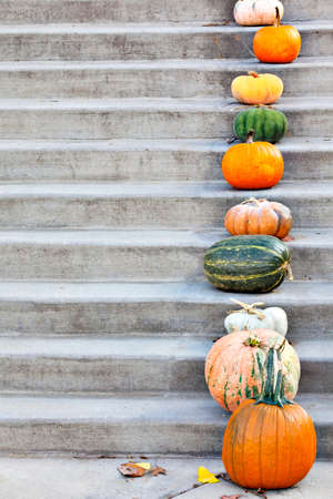 Pumpkins on the concrete stairs with space for text