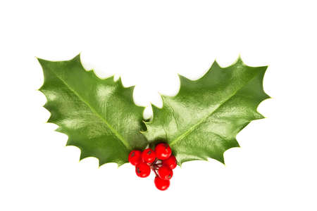 Holly leaves and berries isolated on white background. Christmas postcard concept photo