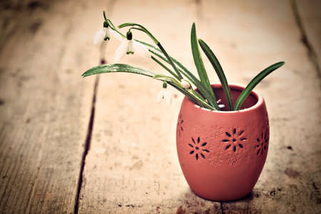 Bunch of snowdrop flowers in clay vase on wooden floor photo