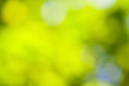 Defocused abstract bokeh of green foliage for use at graphic design  photo