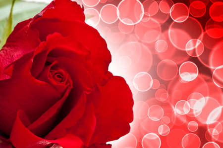 backgraound: Red valentine rose on circle bokeh backgraound