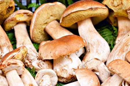 이탈리아에서 시장에서 Porcini 버섯의 근접 촬영 잔뜩