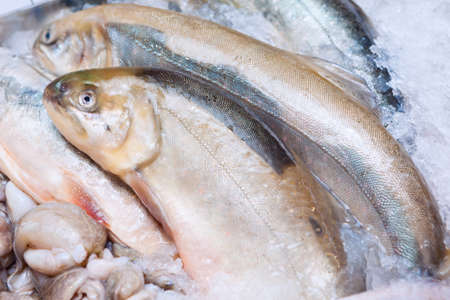 rainbow trout: Fresh Rainbow Trout fish closeup at the seafood market. Display of catch of the day Stock Photo