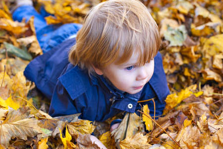 wee: Toddler blond boy with blue eyes lays on bed of autumn fallen leaves