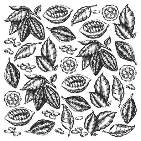 Cocoa beans illustration. Engraved style illustration. Chocolate cocoa beans. Vector pattern illustration Çizim