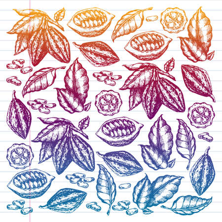 Colorful cocoa beans illustration on white background. Engraved style illustration. Chocolate cocoa beans.  pattern illustration