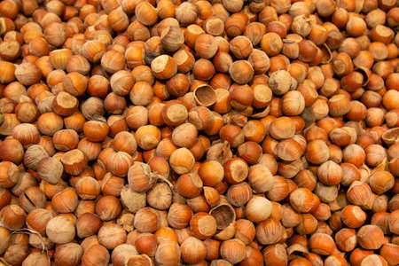 Forest nut background. Full and half of hazelnuts on white background top view. Isolated Stock fotó