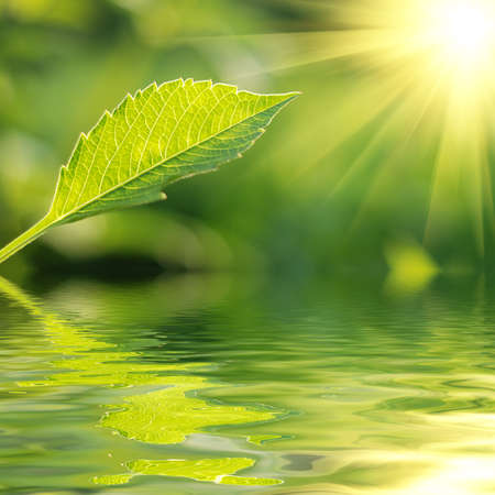 Fresh green leaf highlighted by sun. Stock Photo - 4231623