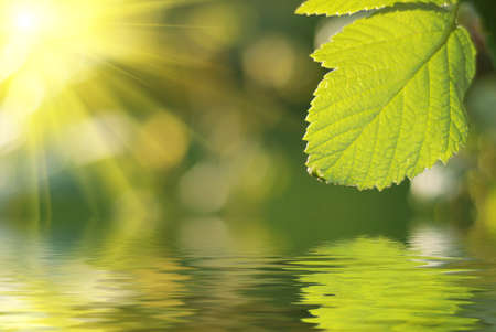 Fresh green leaf highlighted by sun. Stock Photo - 4231621