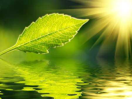 fresh green leaf in sunrise rays