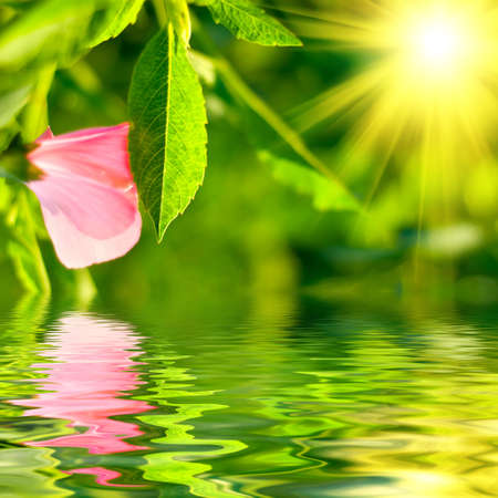 reflects: Fresh green leaf highlighted by sun Stock Photo