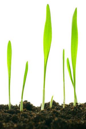 isolated plants photo