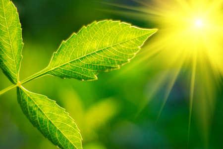 Hojas verdes y frescas de relieve por el sol.