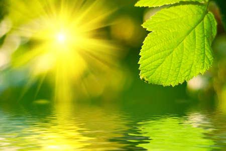 Fresh green leaf highlighted by sun. photo