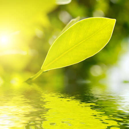 Fresh green leaf highlighted by sun on water. photo