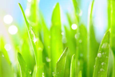 fresh wet grass in sun rays, closeup  photo
