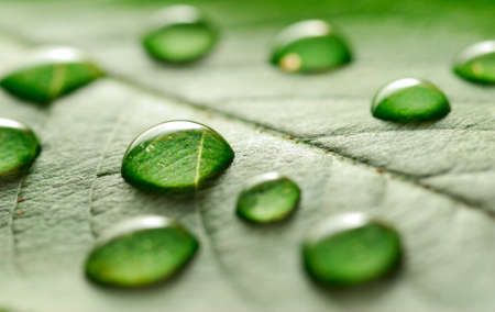 water drops on the leaf photo