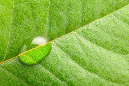 macro photo of a water drop on leaf photo