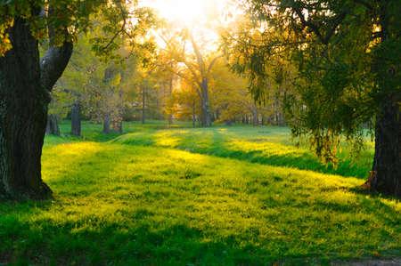 paisaje rural: puesta de sol en otoño de bosque  Foto de archivo
