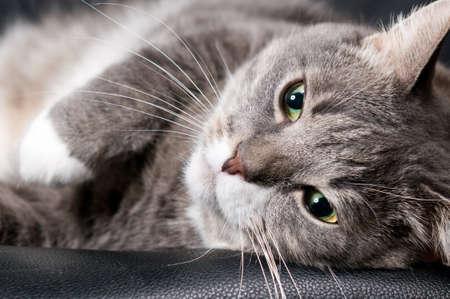 big cat photo