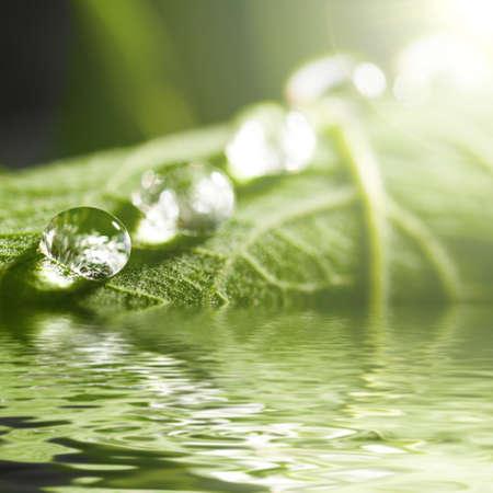 fresh green leaf photo