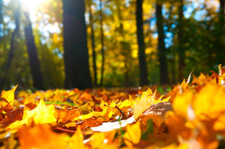 Herbstlaub Standard-Bild - 10002592