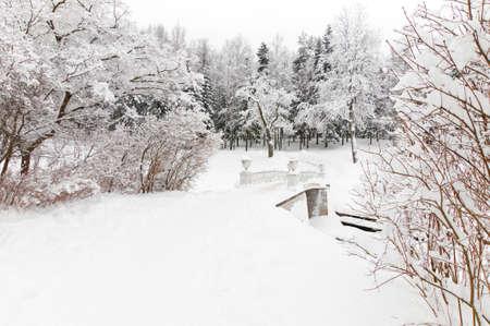 winter snowy park photo