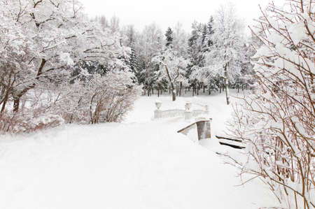 black and white forest: winter snowy park