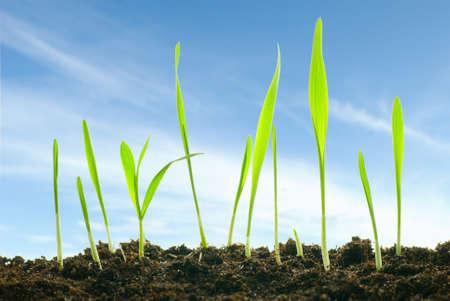 planten tegen een hemel Stockfoto