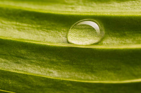 water drop on fresh leaf Stock Photo - 18235593