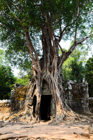 banian tree: Ta Som, part of Khmer Angkor temple complex, popular among tourists ancient landmark and place of worship in Southeast Asia. Siem Reap, Cambodia.