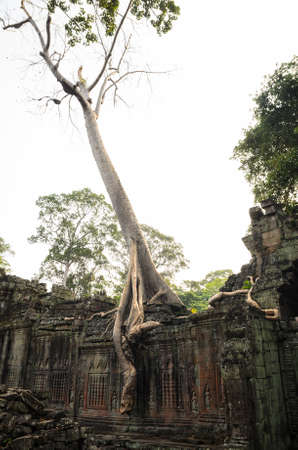 siem reap: Preah Khan, part of Khmer Angkor temple complex, popular among tourists ancient landmark and place of worship in Southeast Asia. Siem Reap, Cambodia. Stock Photo