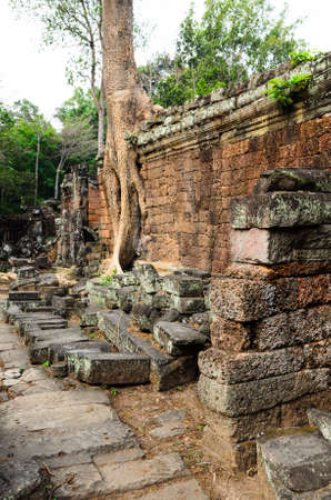 banian tree: Preah Khan, part of Khmer Angkor temple complex, popular among tourists ancient landmark and place of worship in Southeast Asia. Siem Reap, Cambodia. Stock Photo